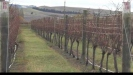 Embedded thumbnail for A delightful home with vineyard and cottage for sale in Waipara