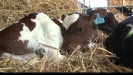 Embedded thumbnail for Carol Wilson: Diary Farmer