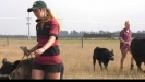 Embedded thumbnail for Townies take on showing Cattle.