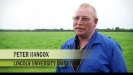 Embedded thumbnail for Peter Hancox: Lincoln University Dairy Farm