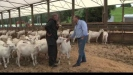 Embedded thumbnail for Barry Foote: Northland Goat Farmer