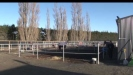 Embedded thumbnail for Tim Mills: Canterbury Jockey Club, Riccarton Park