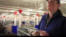 Embedded thumbnail for NZ Pork - Ben